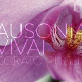 Ausonia Vivai